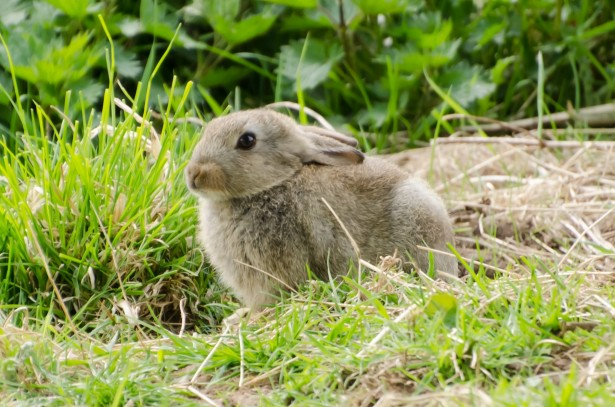 Bunny in the grass.